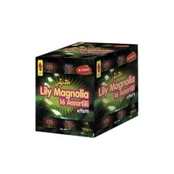 LILY MAGNOLIA 16 ASSORTITE